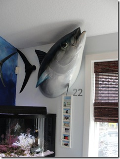 The parts of the Blue Fin Tuna that the shark didn't get