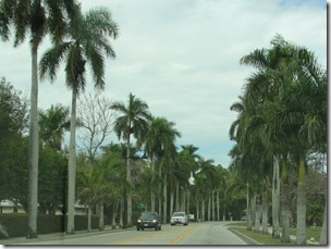 City of Palms