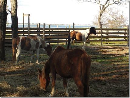 wild ponies...?
